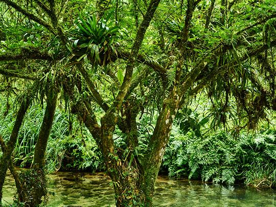 Coeur Boukiki Martinique