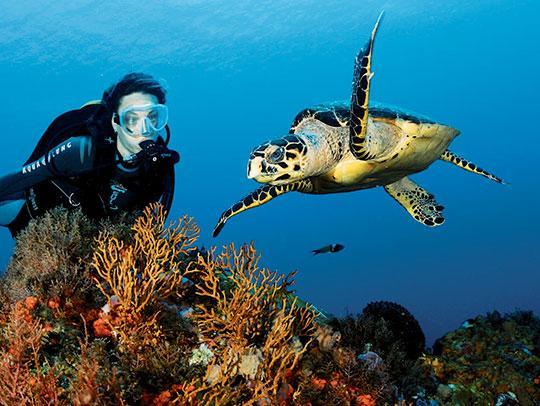 Plongée sous-marine en Martinique avec une tortue