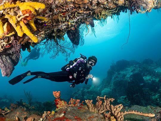 Plongée sous-marine en Martinique